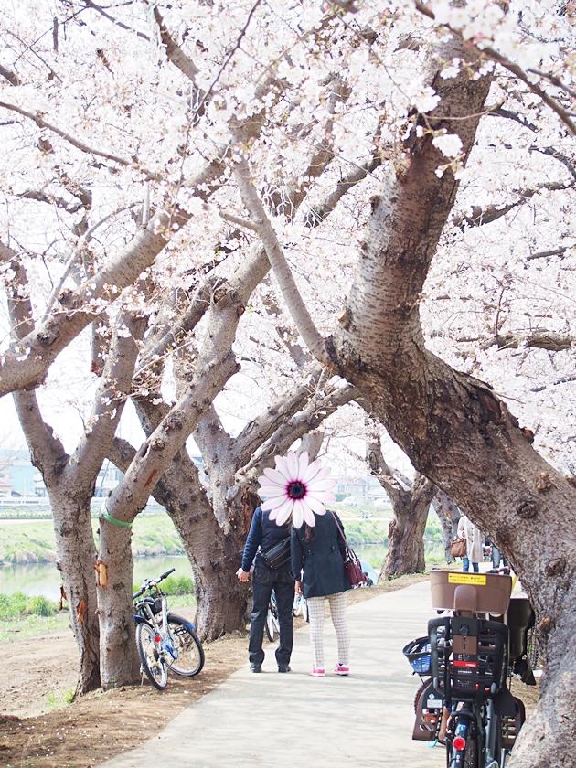 桜の中のカップル