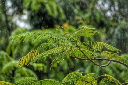 雨に濡れる木