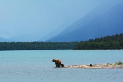 アラスカの風景 熊の親子 湖