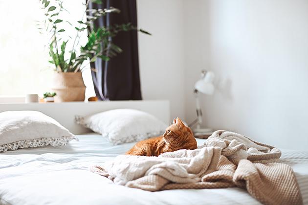 明るいベッドに横になる猫